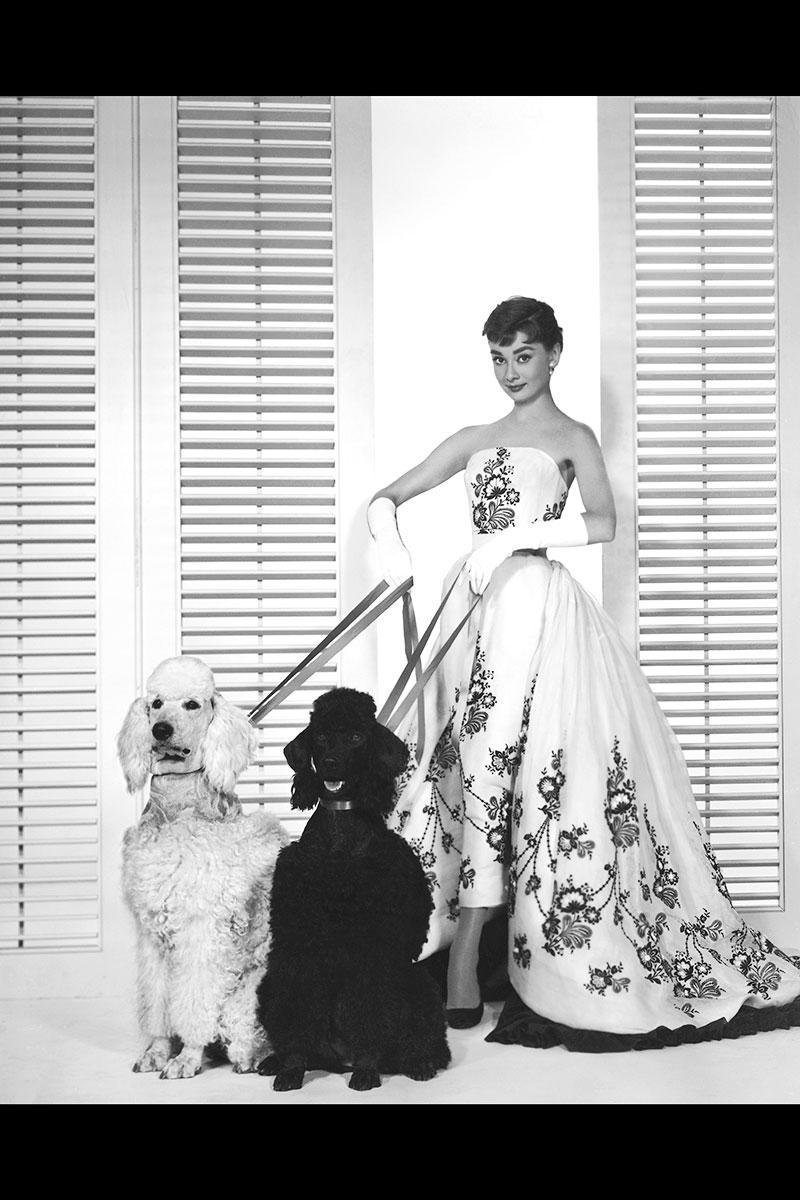 audrey-hepburn-with-dogs